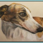 Greyhound Portrait by Thomas Adamski